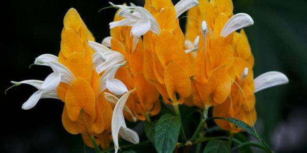 Flowers - Aberdeen Duthie Park Winter Gardens